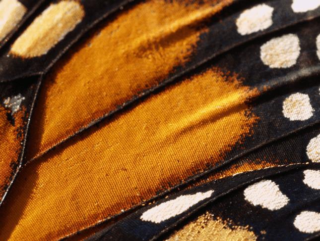 BEEDANCE butterfly