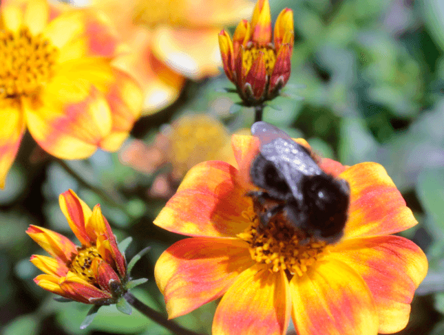 BEEDANCE loved by bees