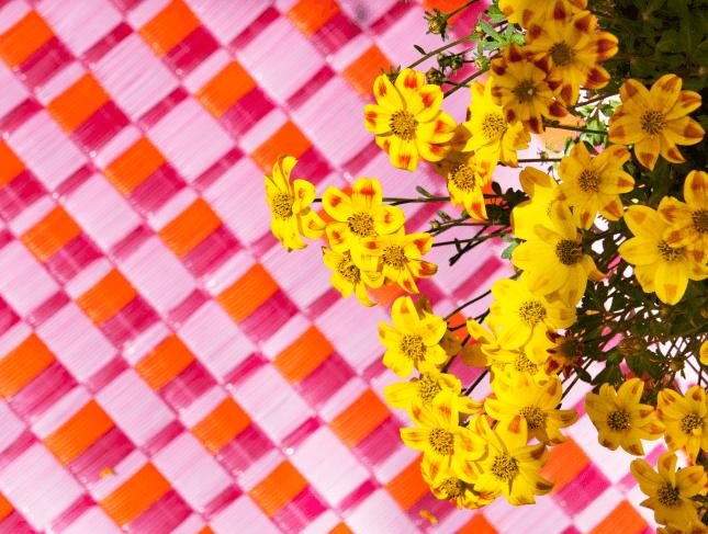 Beedance painted yellow | Hybrid bidens