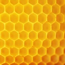 BEEDANCE honey