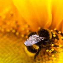 Bees and butterflies love beedance